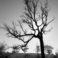 Tindarra in Black and White