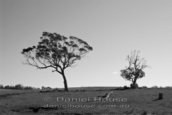 Two Trees in Drought_edited-1